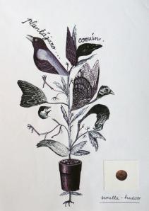 platájaro común